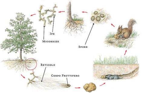 ciclo_biologico